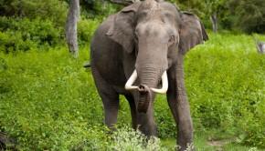 elephant_of_india