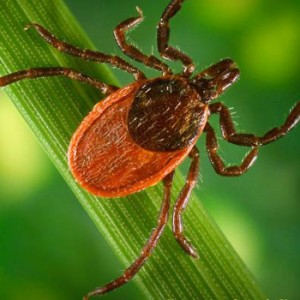 how_to_prevent_lyme_disease